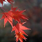 Red glory by turningjapanese