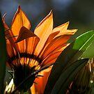 orange by Sue Frank
