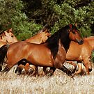 Chief and his Mares 2 by Sue Ratcliffe