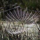 Pearls in a web by ienemien