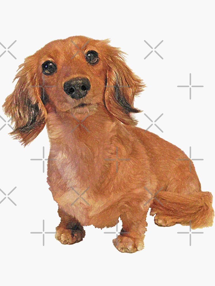 Cute Long Haired Dachshund Painting by SmartPooch