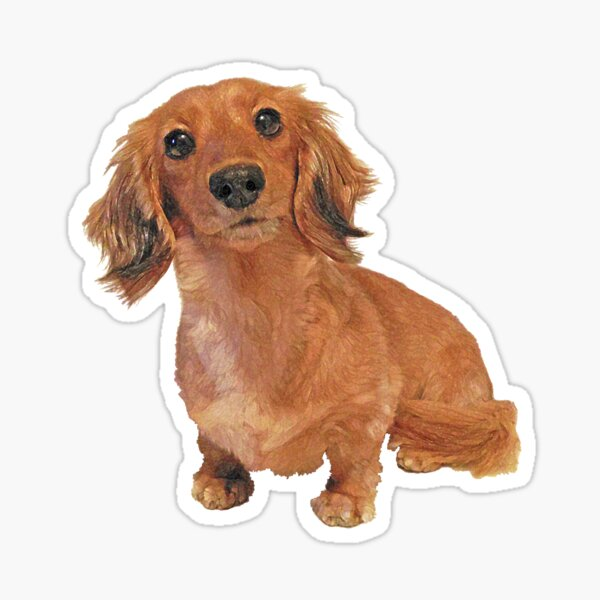 Cute Long Haired Dachshund Painting Sticker