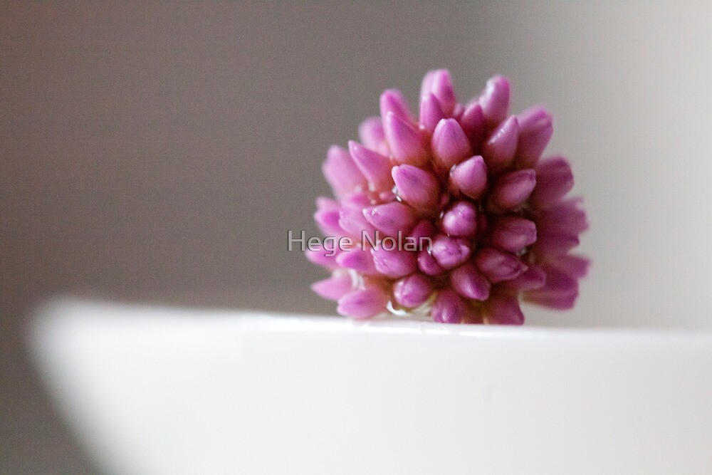 pink flower from the front by Hege Nolan