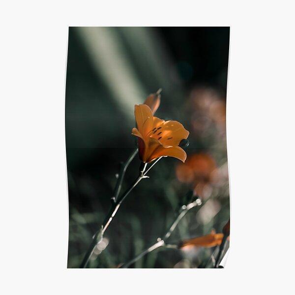Dark and moody orange daylily macro on green background Poster