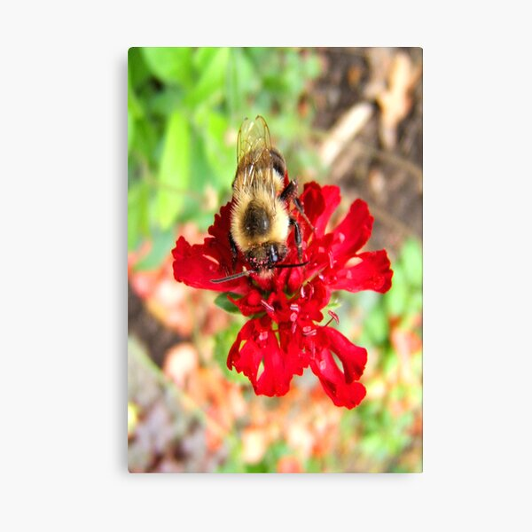 Busy Bee... ©  Canvas Print