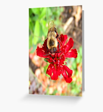 Busy Bee... ©  Greeting Card