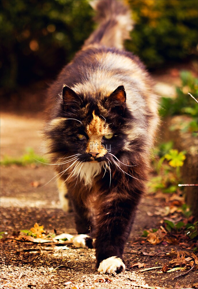 Prowling by iltby