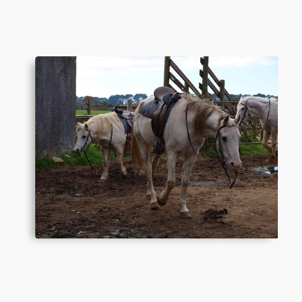 all saddled up with somewhere to go Canvas Print