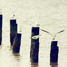 Gulls by Jonicool