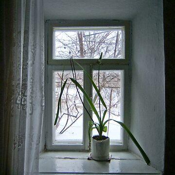 Window by Naumovka