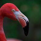 Flamingo Head by zzsuzsa