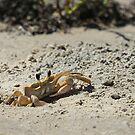 Crab by KatsEyePhoto