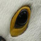 l got my eye on you! by flipteez