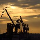 Cranes in the early morning light by vbk70