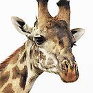 Giraffe beauty by Ingrid *