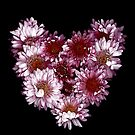 """""""Crysanthemums With Love"""" by Michelle Lee Willsmore"""