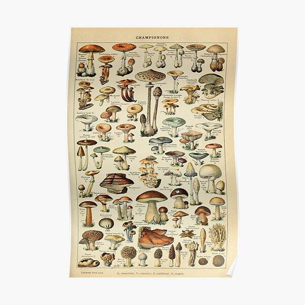 Vintage Edible Mushroom Chart - Adolphe Millot Poster