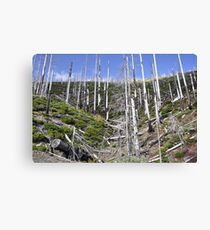 forgotten forest Canvas Print