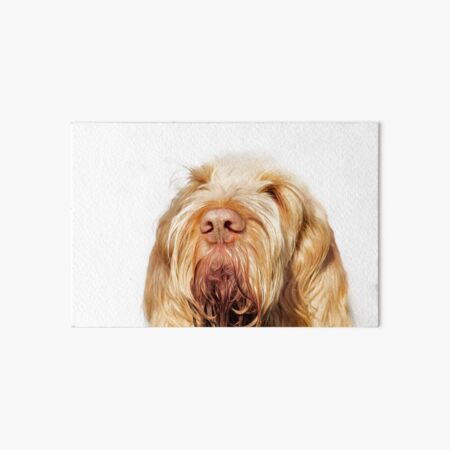 Waiting for you Spinone Art Board Print
