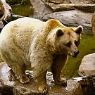 BEAR by Ronald Rockman
