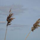 Reeds against sky by KatDoodling