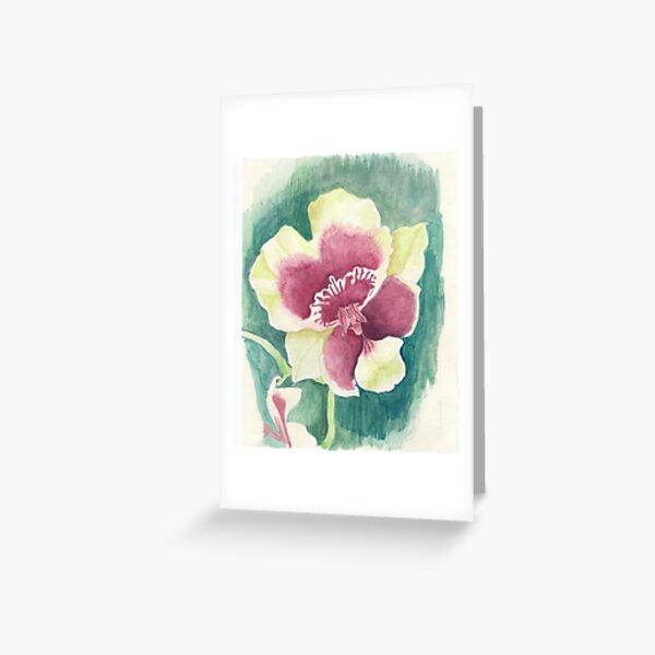 Flower of Miltonia Greeting Card