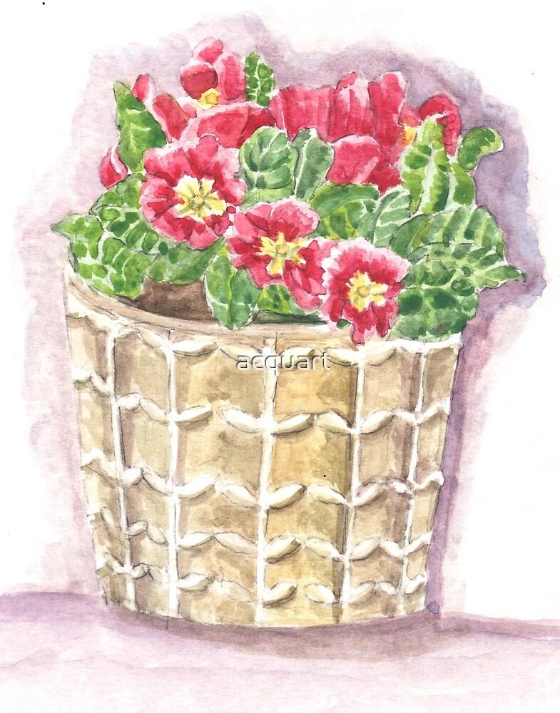Jar primrose by acquart
