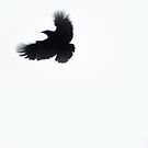 Crow by LAURANCE RICHARDSON