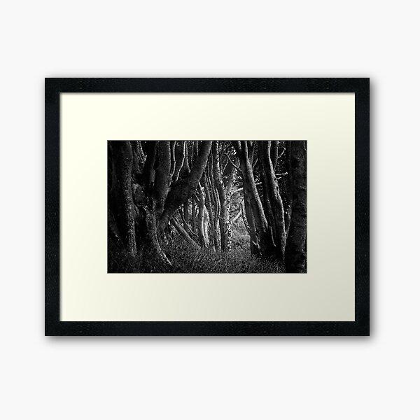 Forest Highlight - Isle of Mull Framed Art Print