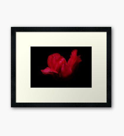 Patricia's Tulip Framed Print