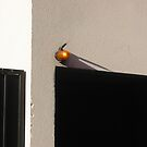 Wall street n°3 by Dominique MEYNIER