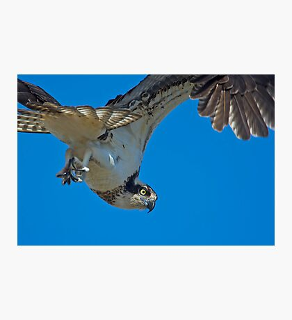 Close Encounter of the Avian Kind  Photographic Print