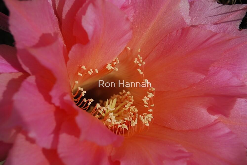 Echinopsis Up Close by Ronald Hannah