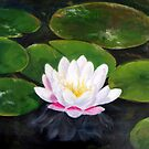 waterlilies by hangwilliamson