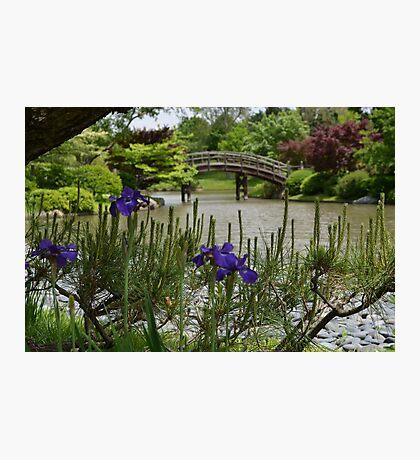 Purple Iris and Pine in Japanese Garden Photographic Print
