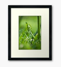 In the Pumpkin Patch - 1 Framed Print