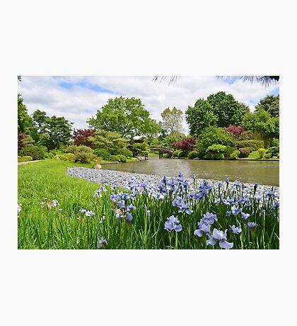Light purple iris in Japanese Garden Photographic Print