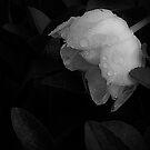 White Rain by James L. Brown