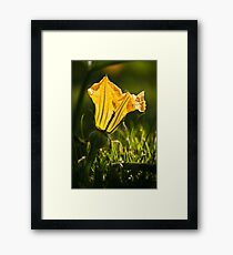 In the Pumpkin Patch - 2 Framed Print