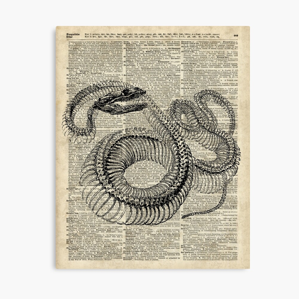 Phenomenal Boa Snake Skeleton Ink And Pen Anatomy Chart Vintage Dictionary Art Wiring Cloud Ratagdienstapotheekhoekschewaardnl