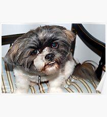 Chewie's pet dog Poster