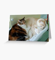 A Pile of Overgrown Kittens Greeting Card
