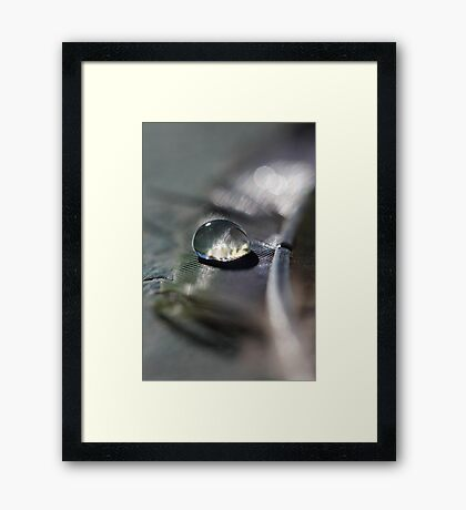 Feathered Friend Framed Print