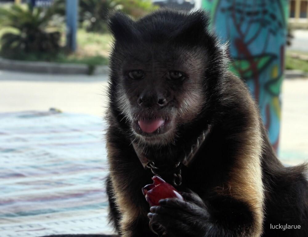 Capuchin Monkey by luckylarue