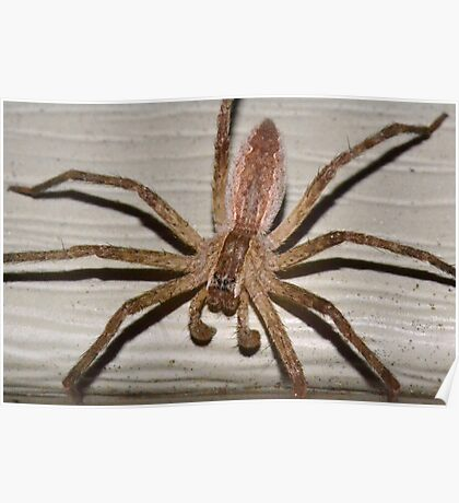 Scary Nursery Web Spider. Poster