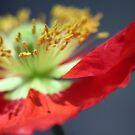 Velvet Red by Olivia Plasencia