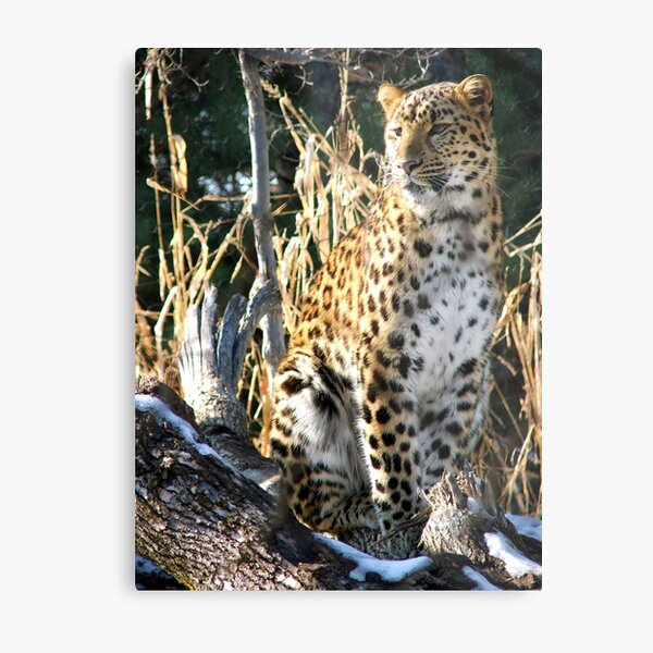 Russian Queen Metal Print