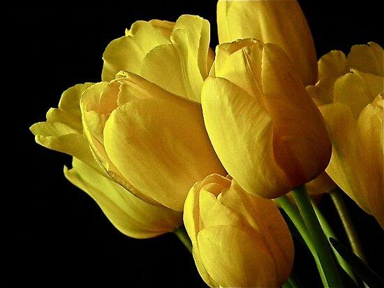 Happy Spring by Cheryl  Lunde