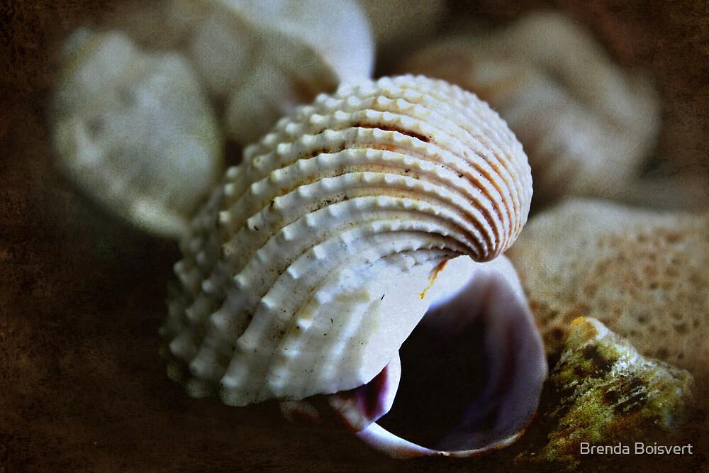 Sea Shells by Brenda Boisvert