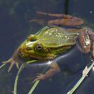 Frog by Sanne Hoekstra